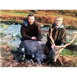 Ireland Choice of Red Deer, Sika Deer or Hybrid cross for 2 Hunters