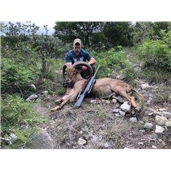 Aoudad Hunt in Texas with Trash Rack Ranch