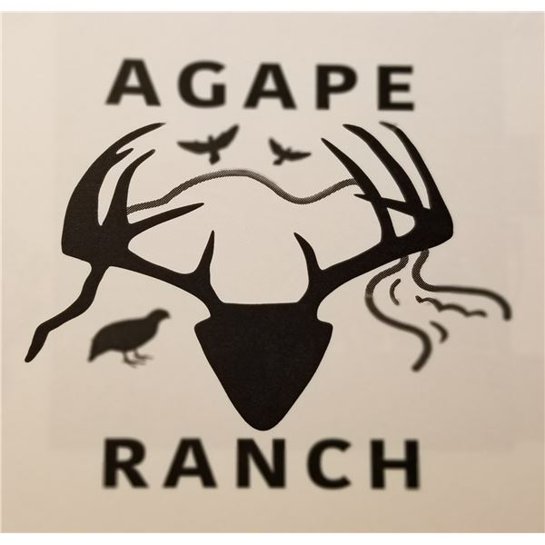 1 day Texas dove hunt for 6 hunters--Agape Ranch