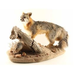 Full Mounted Fox
