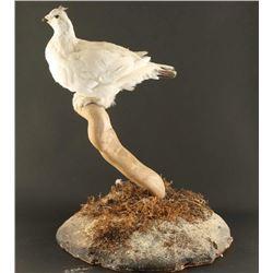 Full Mounted White Ground Bird