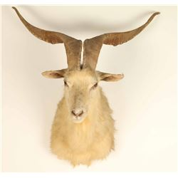 White Goat Mount