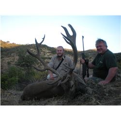 1-Cantabrian Chamois, 1 Stag (190 SCI), 1 European Wild Boar Hunt