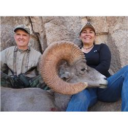 Desert Big Horn Sheep Hunt in Mexico