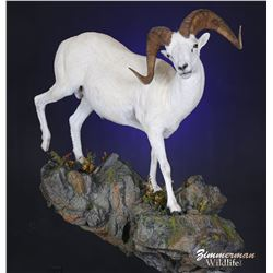 Full Life Size Sheep Mount