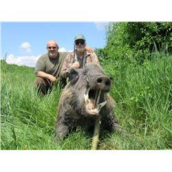Wild Boar in Serbia