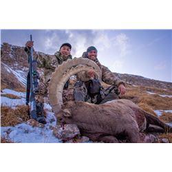 Mid-Asian Ibex Hunt