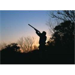 Uruguay Dove Hunt