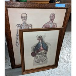 Anatomy posters in antique wood frames x2