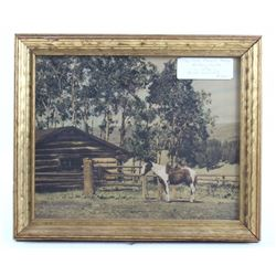 """1930 """"Old Ranch Horse"""" McKay Hand Colored Photo"""