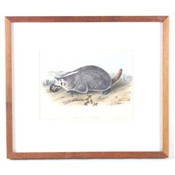 Bowen Lithograph American Badger by Audubon