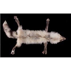 Silver Arctic Fox Taxidermy Hide