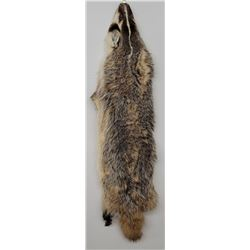 Montana Taxidermy Badger Fur Hide Pelt w/ Claws