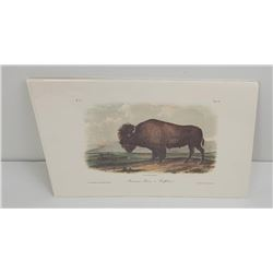American Bison Buffalo James Audubon Octavo Print