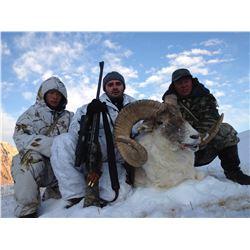 10 Day Tian Shan Argali & Mid Asian Ibex Hunt