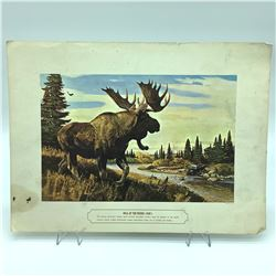 """'Bull of the Woods' Print, 12"""" X 16"""" from the 1920's"""
