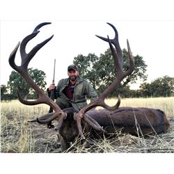 Spain: 4 Day Big Game Hunt for One Hunter, including the trophy fee for 1 Iberian Red Deer Stag
