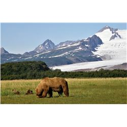 Alaska:  Lake Clark National Park Bearing Viewing Experience for 2 People