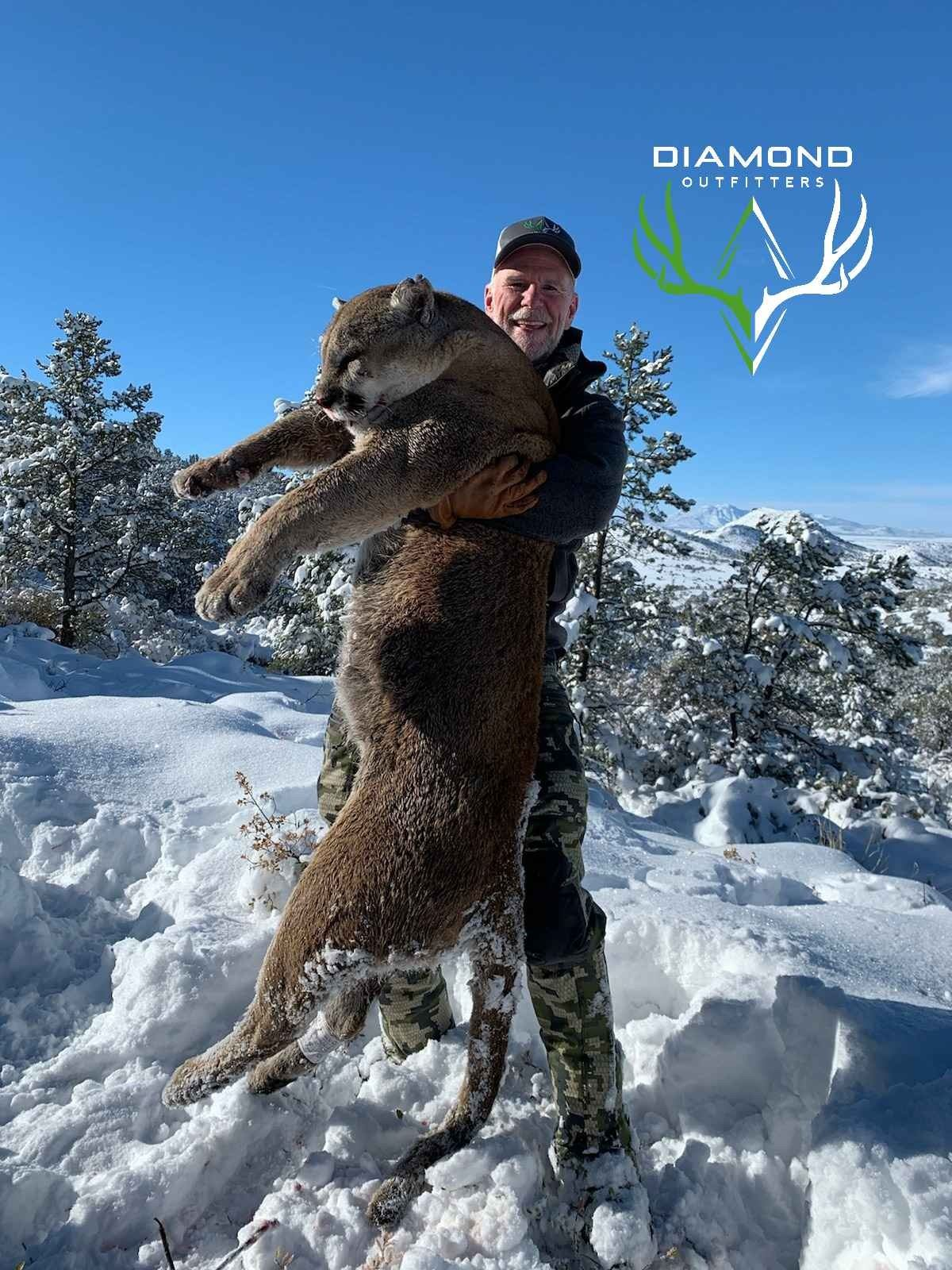 Arizona: 5 Day Guided Mountain Lion Hunt over hounds for 1 Hunter