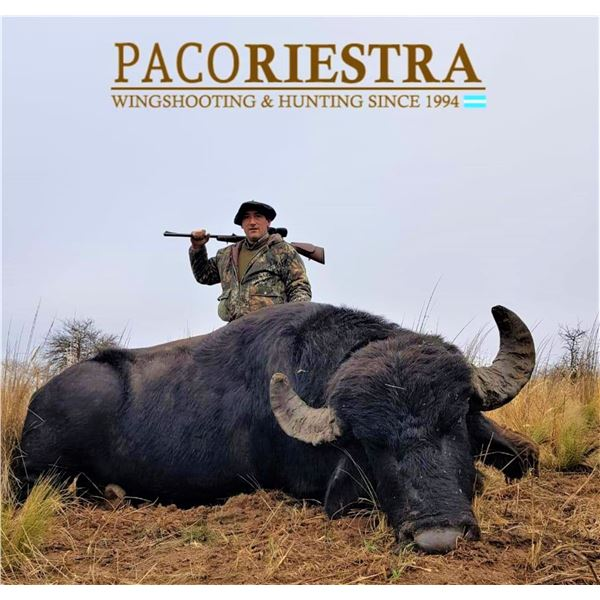Argentina: 5 Day 4 Night Trophy Big Game Hunt for 1 Hunter, includes 1 Buffalo or 1 Red Stag