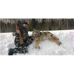 ONTARIO - 6 NIGHTS/5 DAYS TROPHY WOLF HUNT FOR 1 HUNTER: