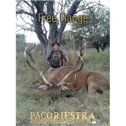 ARGENTINA - FIVE DAY BIG GAME HUNT FOR 1 TO 8 HUNTERS