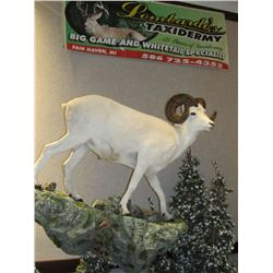 $500 GIFT CERTIFICATE FOR TAXIDERMY WORK
