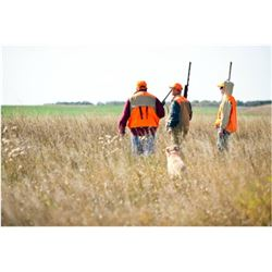 MICHIGAN - PHEASANT HUNT FOR FOUR HUNTERS