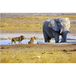 NAMIBIA - 10 DAY HUNTING SAFARI INCLUDING ETOSHA NATIONAL PARK TOUR