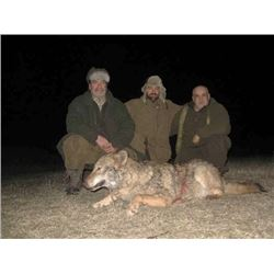 MACEDONIA - WOLF HUNT WITH RIFLE FOR 2 HUNTERS