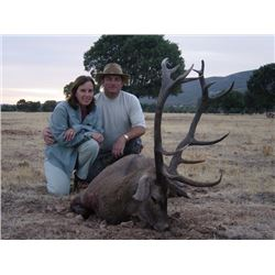 SPAIN - RED STAG, FALLOW DEER OR MOUFLON SHEEP HUNT FOR 1 HUNTER