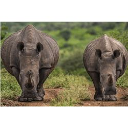 SOUTH AFRICA - SIX DAY GUIDED PHOTOGRAPHIC SAFARI FOR 2 PEOPLE