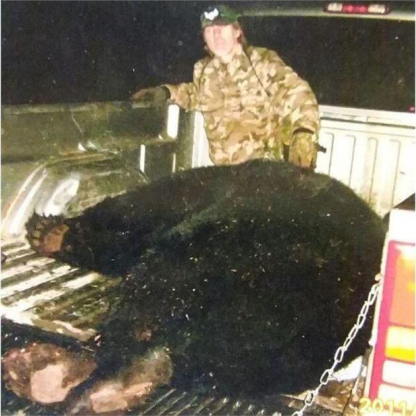 MINNESOTA - 7 DAY HUNT FOR GIANT BLACK BEAR FOR 1 HUNTER