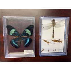 Single Butterfly and Dragonfly Display Case Lot of 2