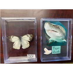 Single Butterfly and Tiger Shark Tooth Display Case Lot of 2