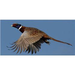 Feather Ridge Ranch 6 Bird Pheasant Hunt