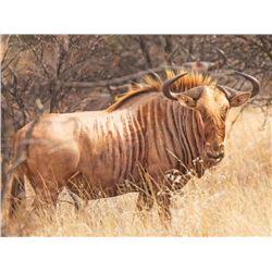 Jannie Otto Safaris 2021/2022 - South African Golden Wildebeest & Victoria Falls Safari Combo