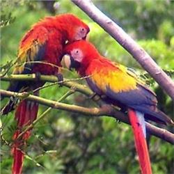 Safari Unlimited LLC  8 Day 7 night trip for 2 in Belize at Cotton Tree Lodge.