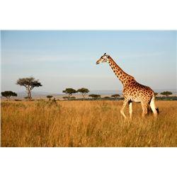 Sporting Adventures Intl./Primus Villas LLC – Limpopo Province, South Africa  2 people Photo Safari