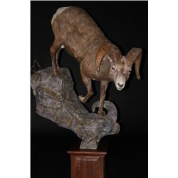 $750 Taxidermy Credit