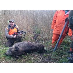 Wild Boar Hunting in Poland