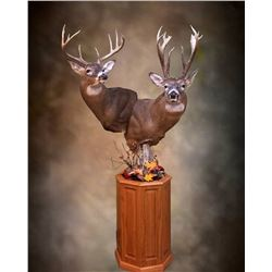 $1,000.00 Taxidermy Credit Toward a minimum of 2 shoulder mounts or 1 lifesize