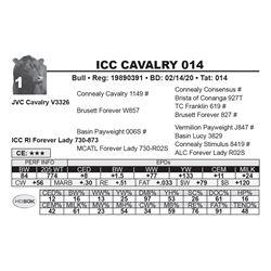 ICC CAVALRY 014