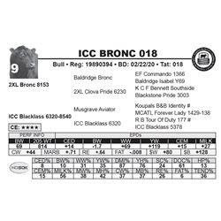ICC BRONC 018