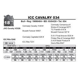 ICC CAVALRY 034