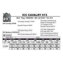 ICC CAVALRY 013