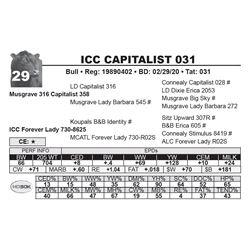 ICC CAPITALIST 031