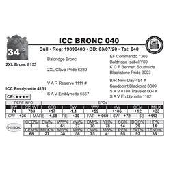 ICC BRONC 040