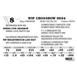 WIP CROSSBOW 0034