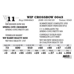 WIP CROSSBOW 0043